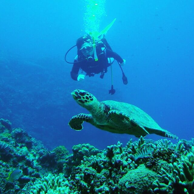 Diver with turtle Okinawa