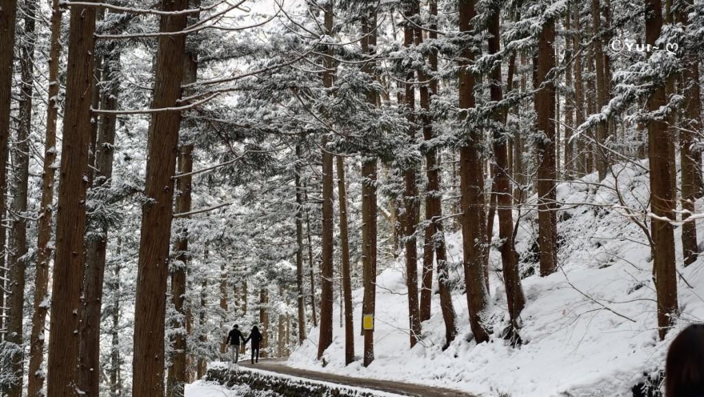 Snow Monkey Park forrest in Nagano