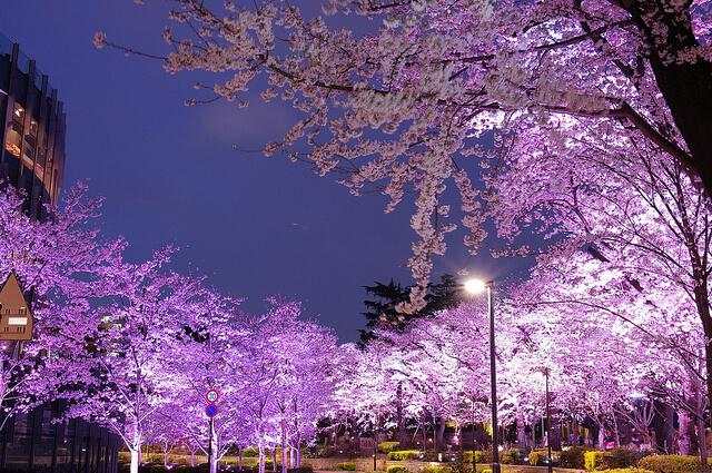 Sakura Tokyo Midtown