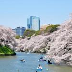 Cherry Blossom Spots in Tokyo (Tokyo Hanami Spots)