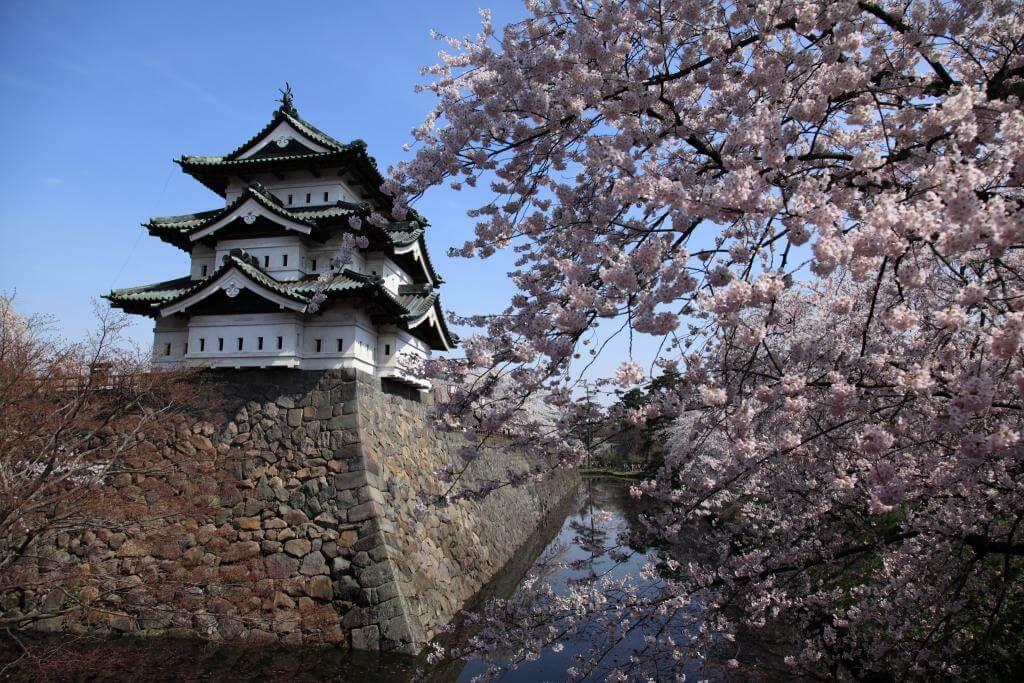 Hirosaki Sakura