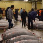 How to watch Tuna auction in Tsukiji fish market!!