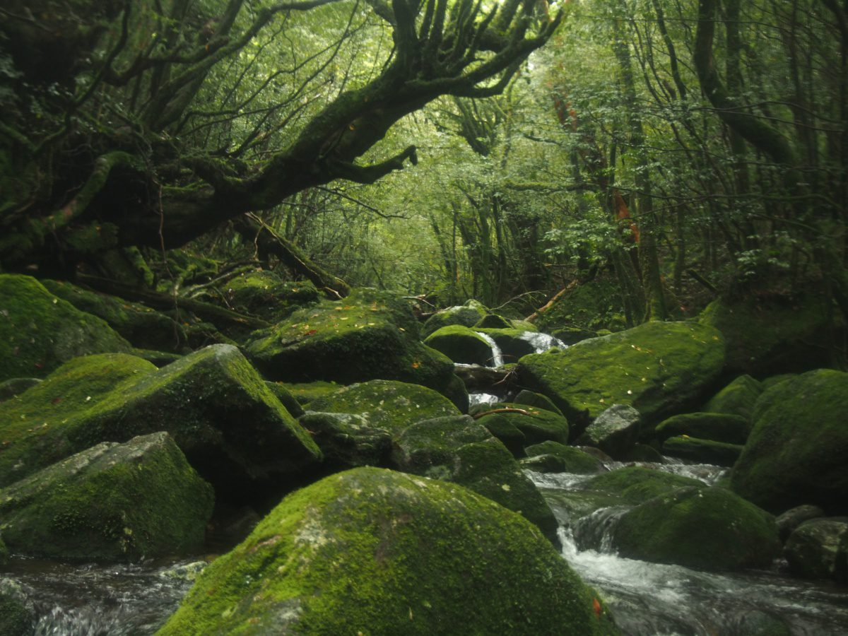 Yakushima, Ghibli location