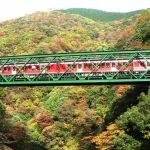 Autumn foliage viewing on a One Day Trip from Tokyo: Kamakura, Hakone, Fuji Five Lakes, Nikko and inner Tokyo