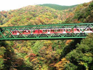 hakone tozan train in autumn