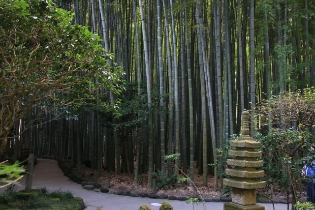 hokokuji bamboo forrest