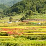 Touring Asuka Village by bike (1 day trip from Nara, Kyoto or Osaka )