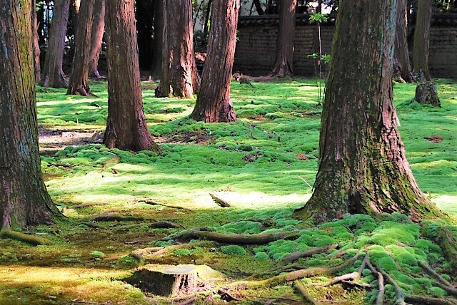 Toshodaiji Temple forest
