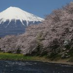 "The best locations to see Cherry Blossom in Japan ""Sakura Calendar"""