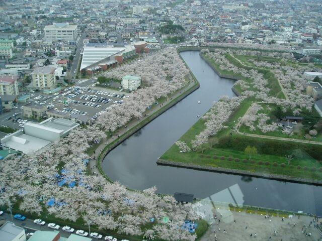 Sakura Goryokaku Fort park in Hakodate, Hokkaido