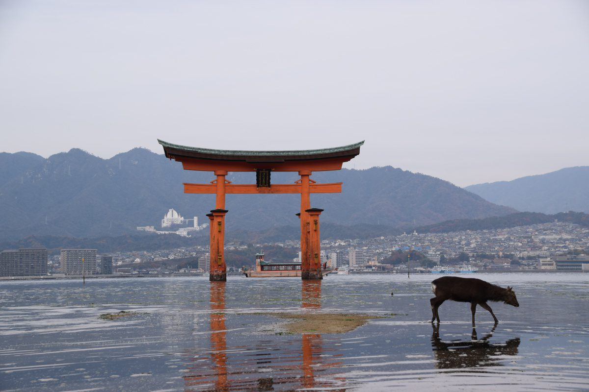 Miyajima Shrine Hiroshima with deer