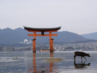 Miyajima Shrine Hiroshima with deer