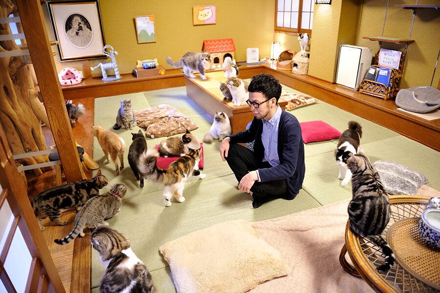 Animal cat cafe