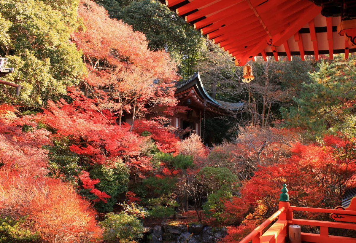 Autumn foliage Bishamondo Temple