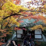 10 Best Places to see Autumn Leaves in Kyoto ~ beautiful world of red leaves~