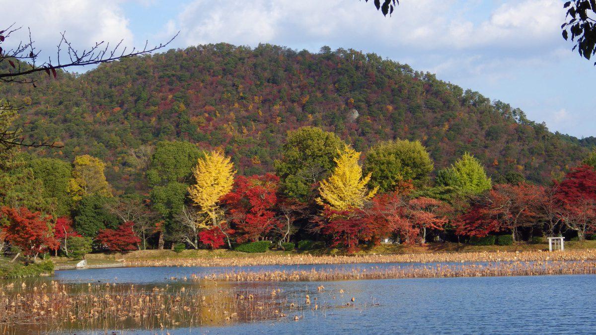 Daikaku-ji Temple autumn foliage