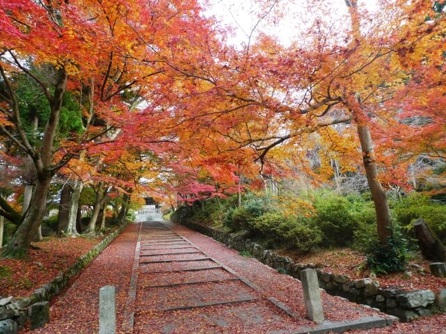 Autumn foliage Bishamondo temple Kyoto