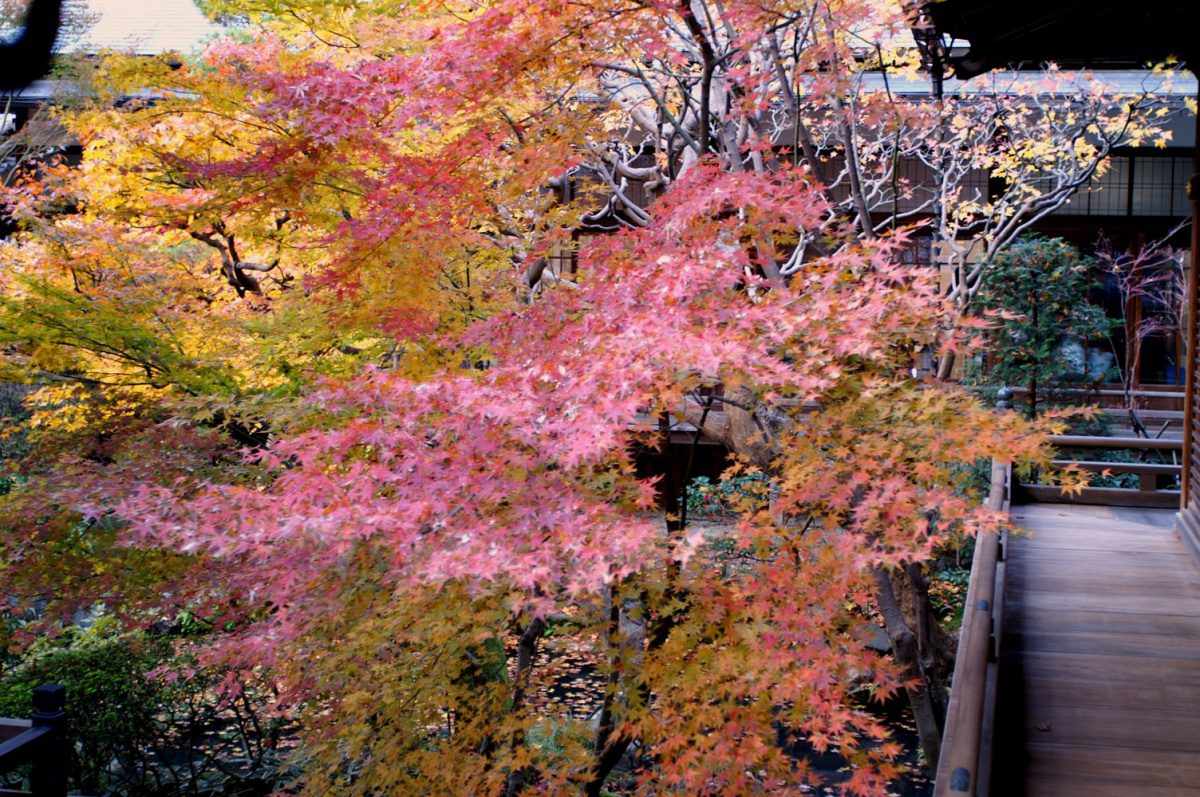 Eikando temple autumn foliage