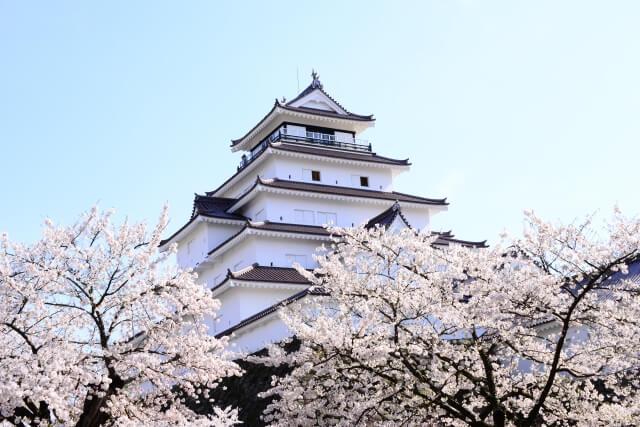 Sakura Tsuruga castle park /Fukushima