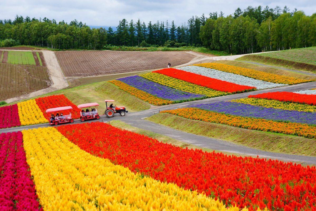 Flower field Hokkaido