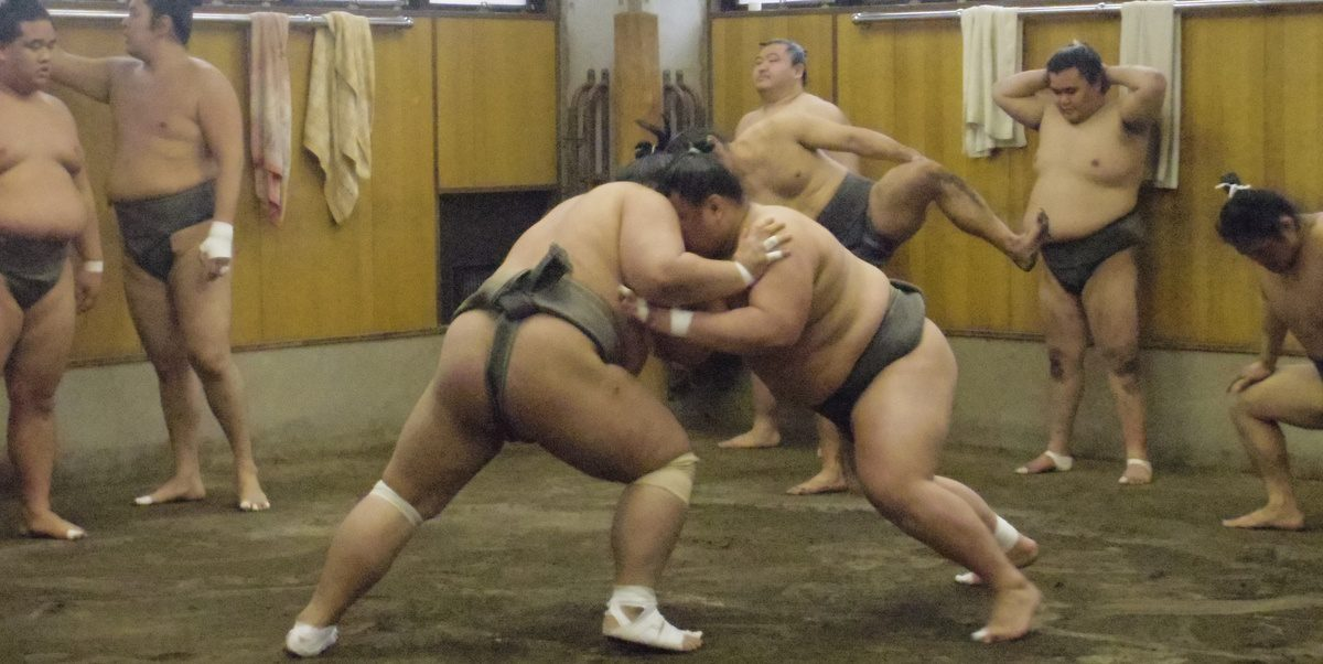 Sumo stables practice