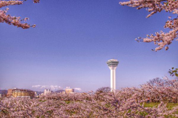 Cherry blossom in Hokkaido