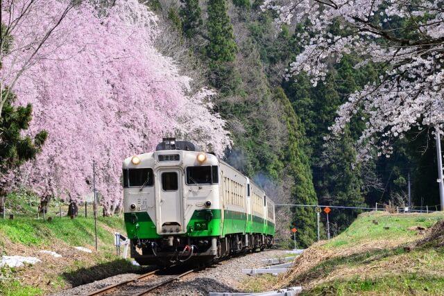 Sakura train Aizu railway / Fukushima