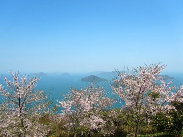 Sakura Mount Shiude /Kagawa