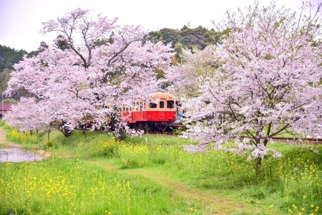 Sakura Kominato Railway & Isumi Railway / Chiba