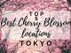 Cherry Blossom spots Tokyo
