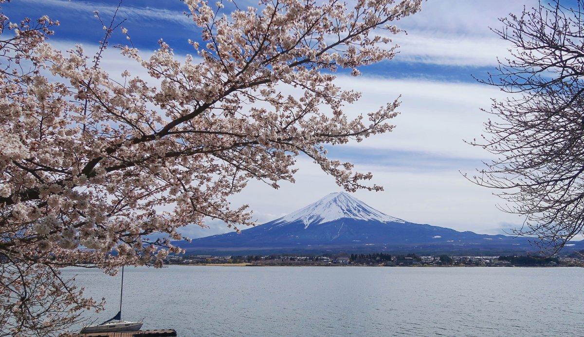 Lake Kawaguchiko, sakura, Mount Fuji