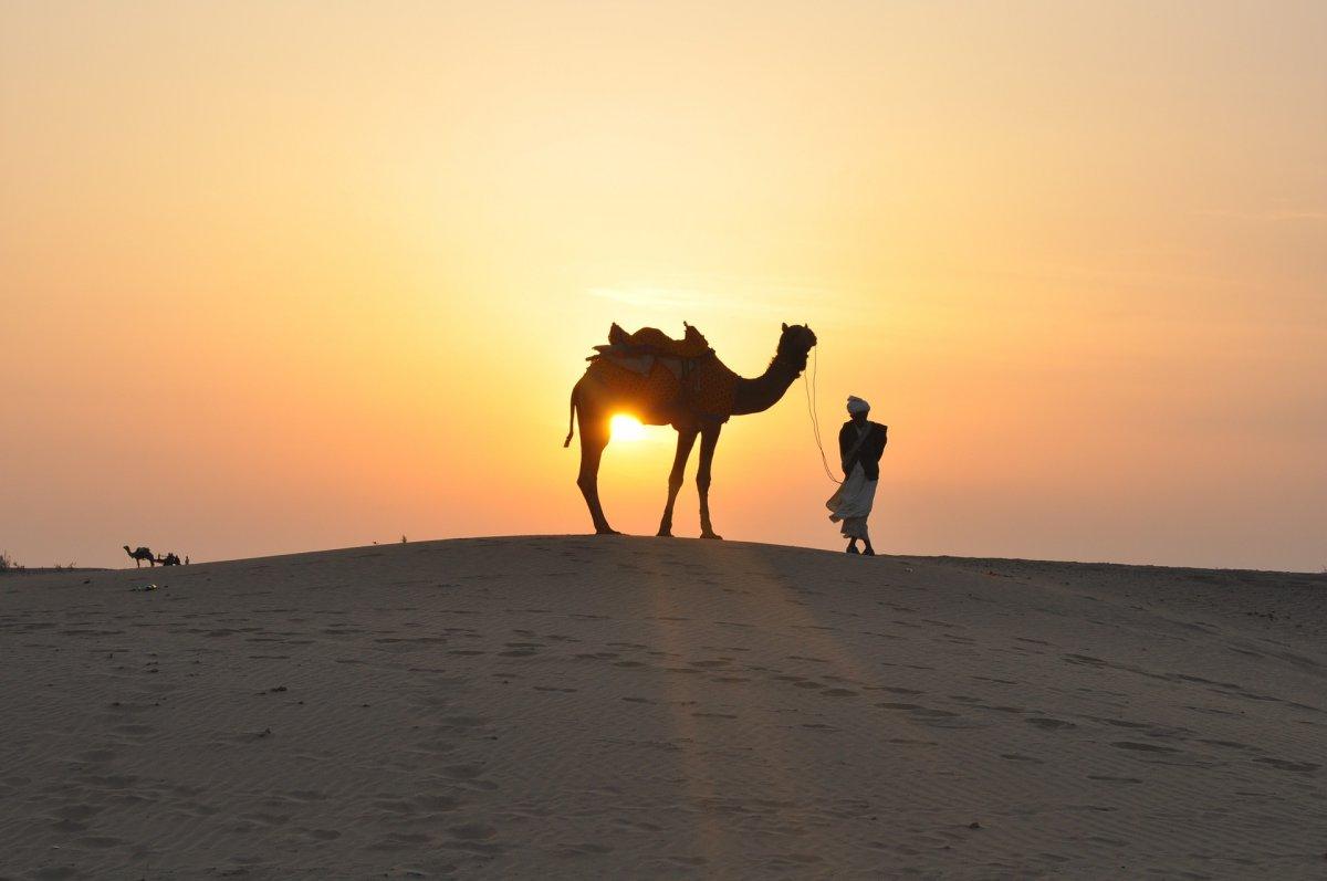 camel tottori