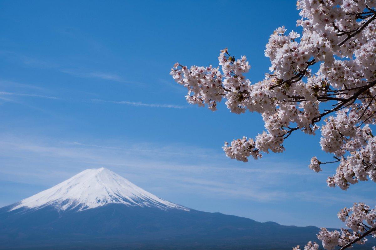 Fuji with Sakura