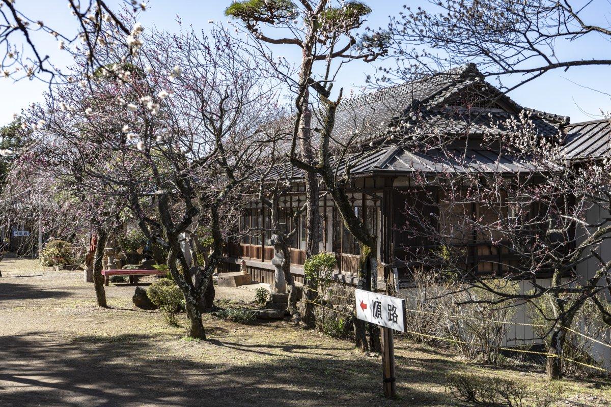 Furoen Plum Blossom