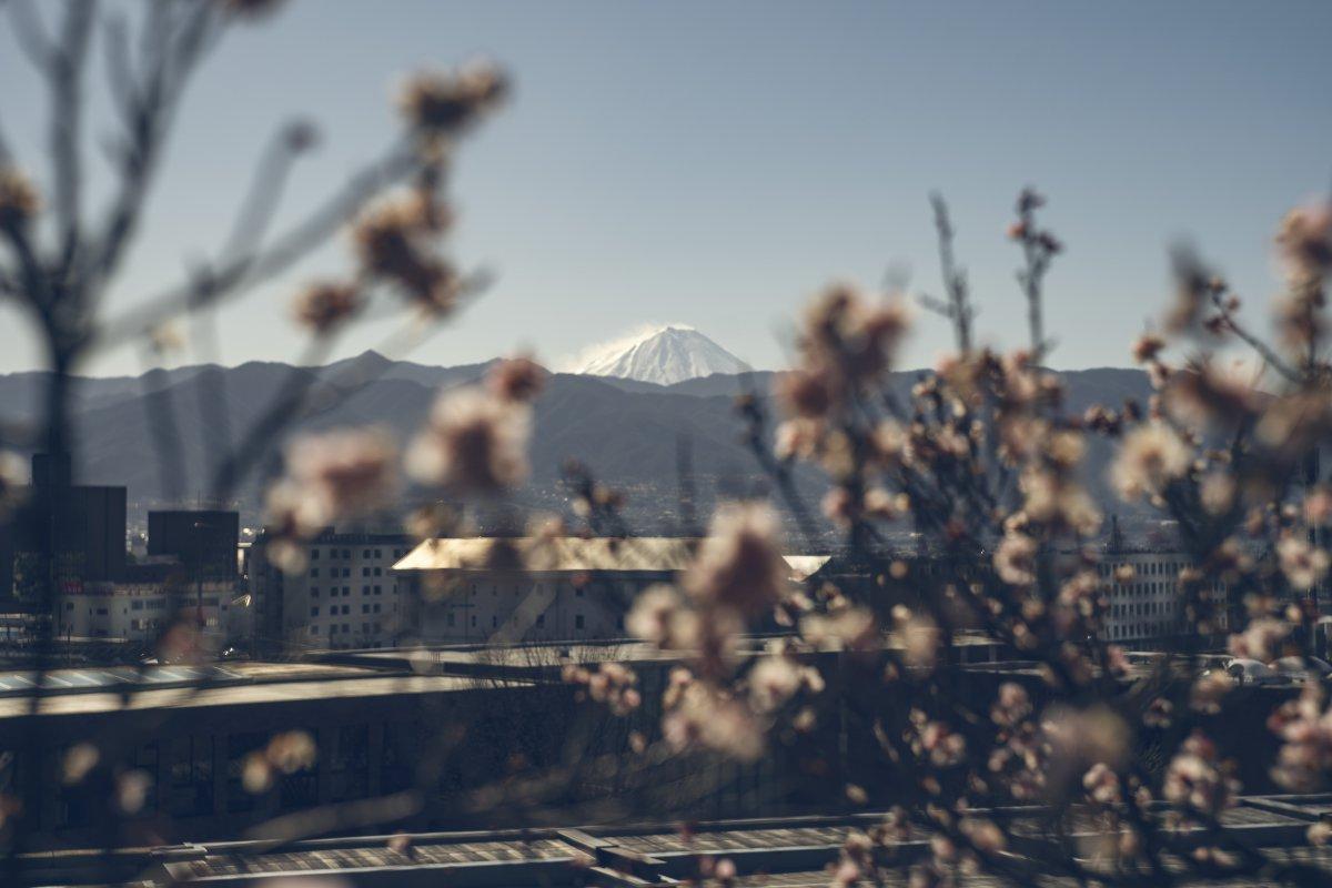 Furoen Plum Blossom Mount Fuji