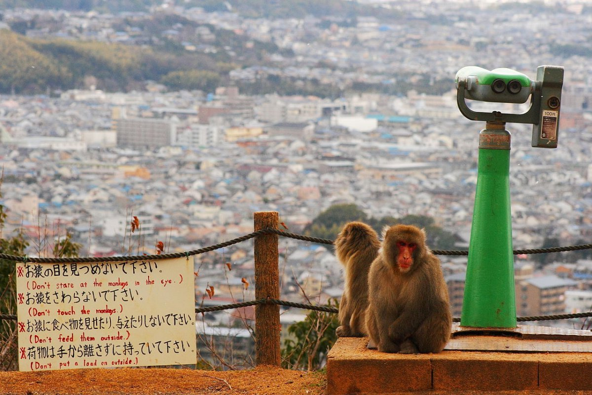 Arashiyama Monkey Park, Monkey Park Iwatayama, Kyoto, Family Friendly Itinerary in Japan, Kids Activity
