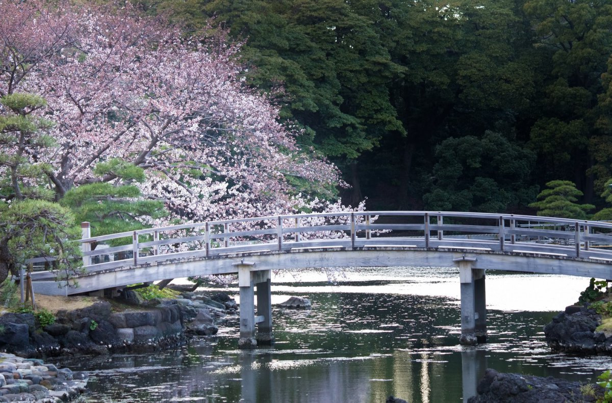 Hamarikyu Garden Tokyo