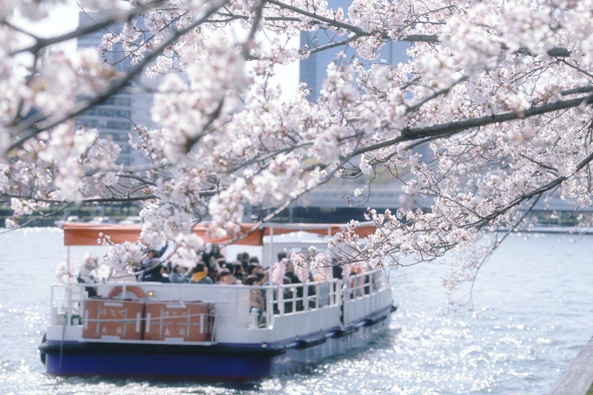 Okawa river Sakura Osaka