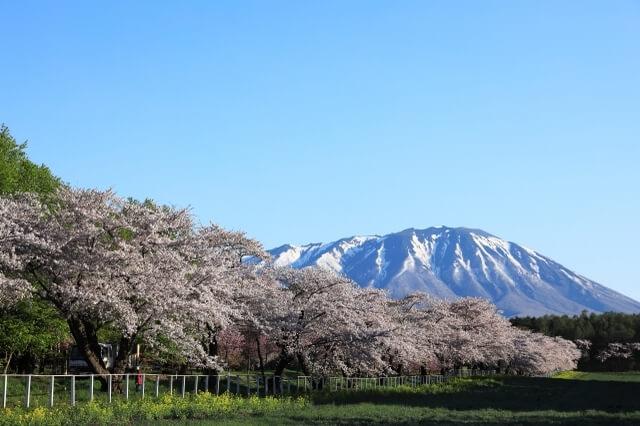 Koiwai Farm Iwate