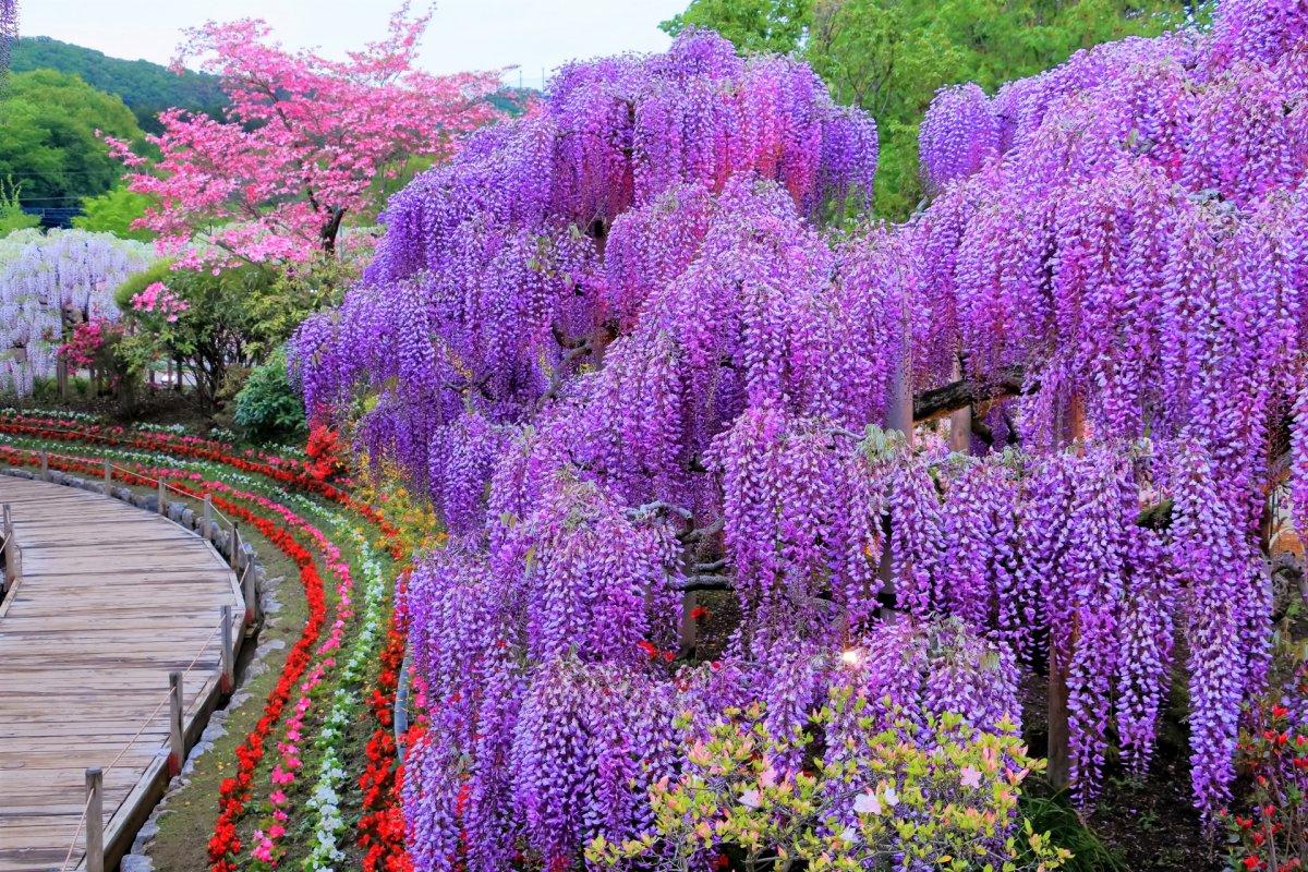 Ashikaga Flower Park tochigi