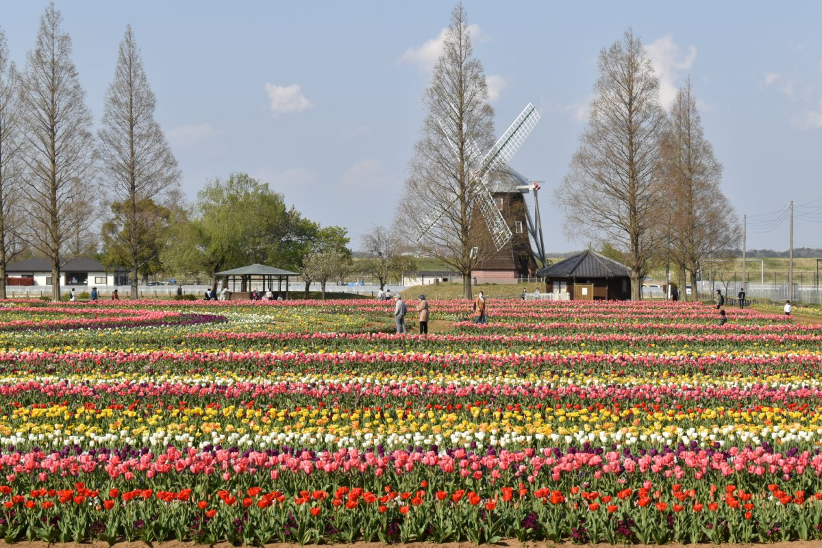 Akebonoyama Agricultural Park Chiba