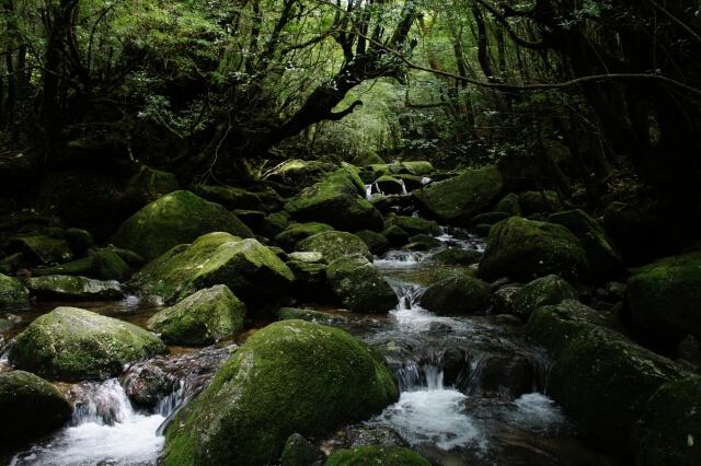Yakushima hiking trails
