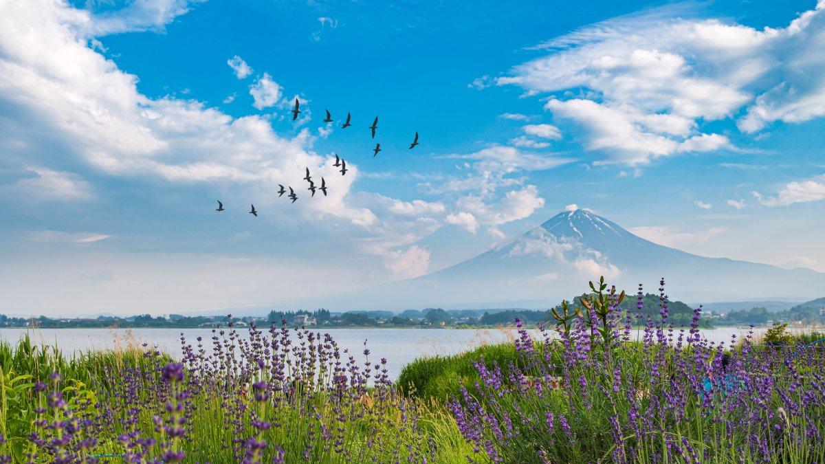 Mt Fuji things to do in Yamanashi