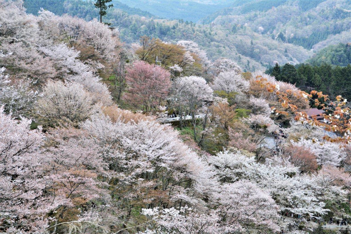 Mt Yoshino Nara