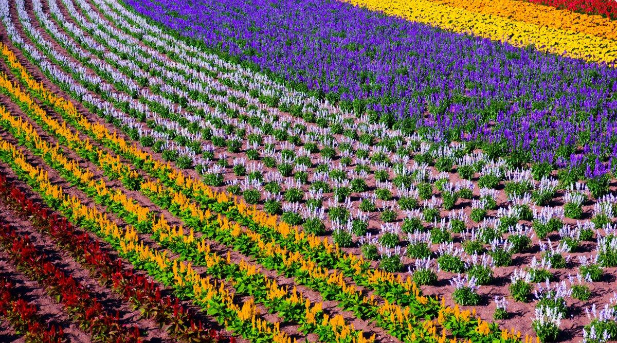 Furano Hokkaido