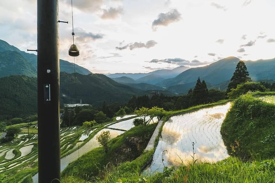 maruyama rice field