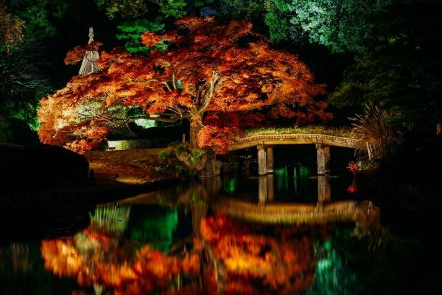 Rikugien Garden autumn