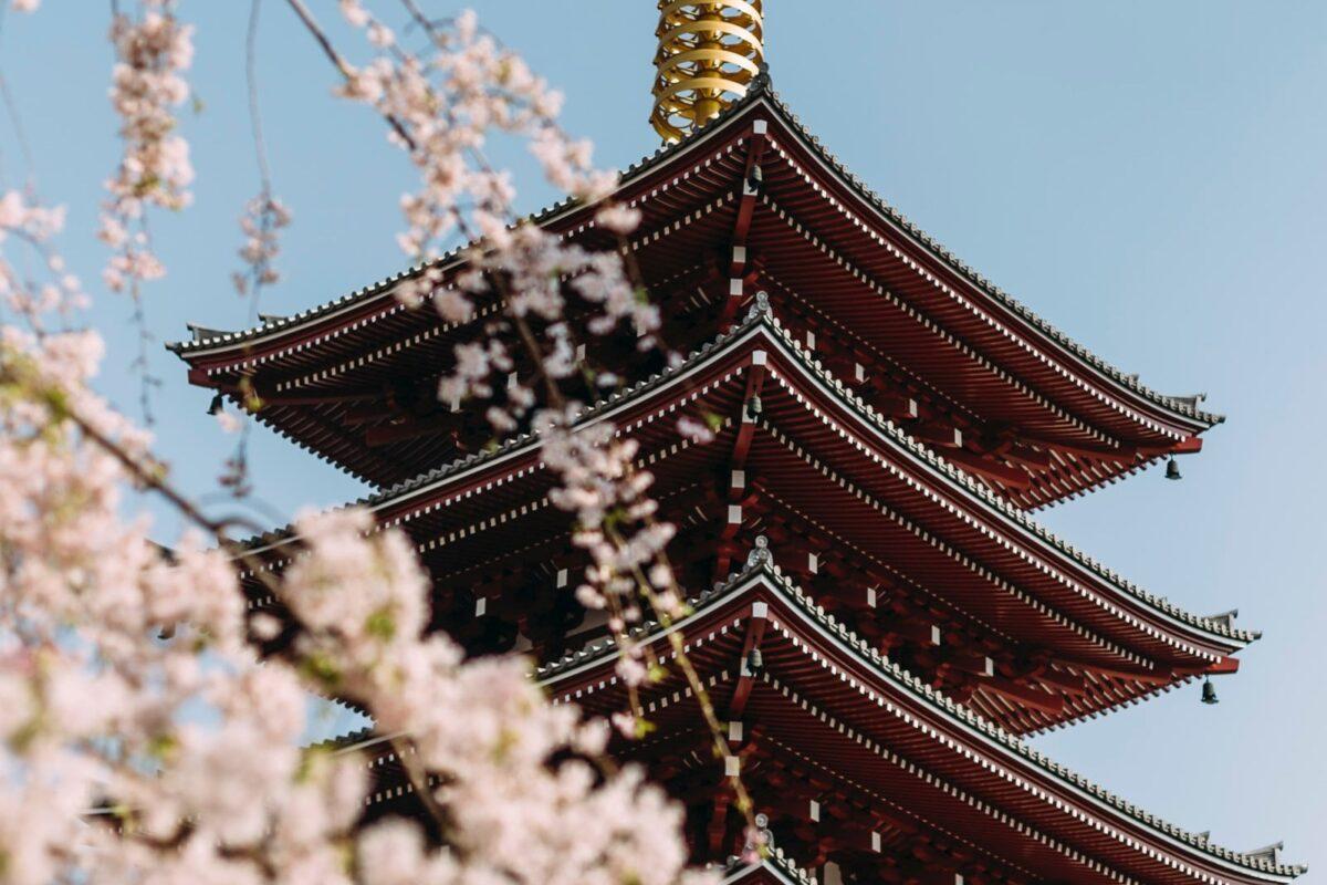 temple sakura