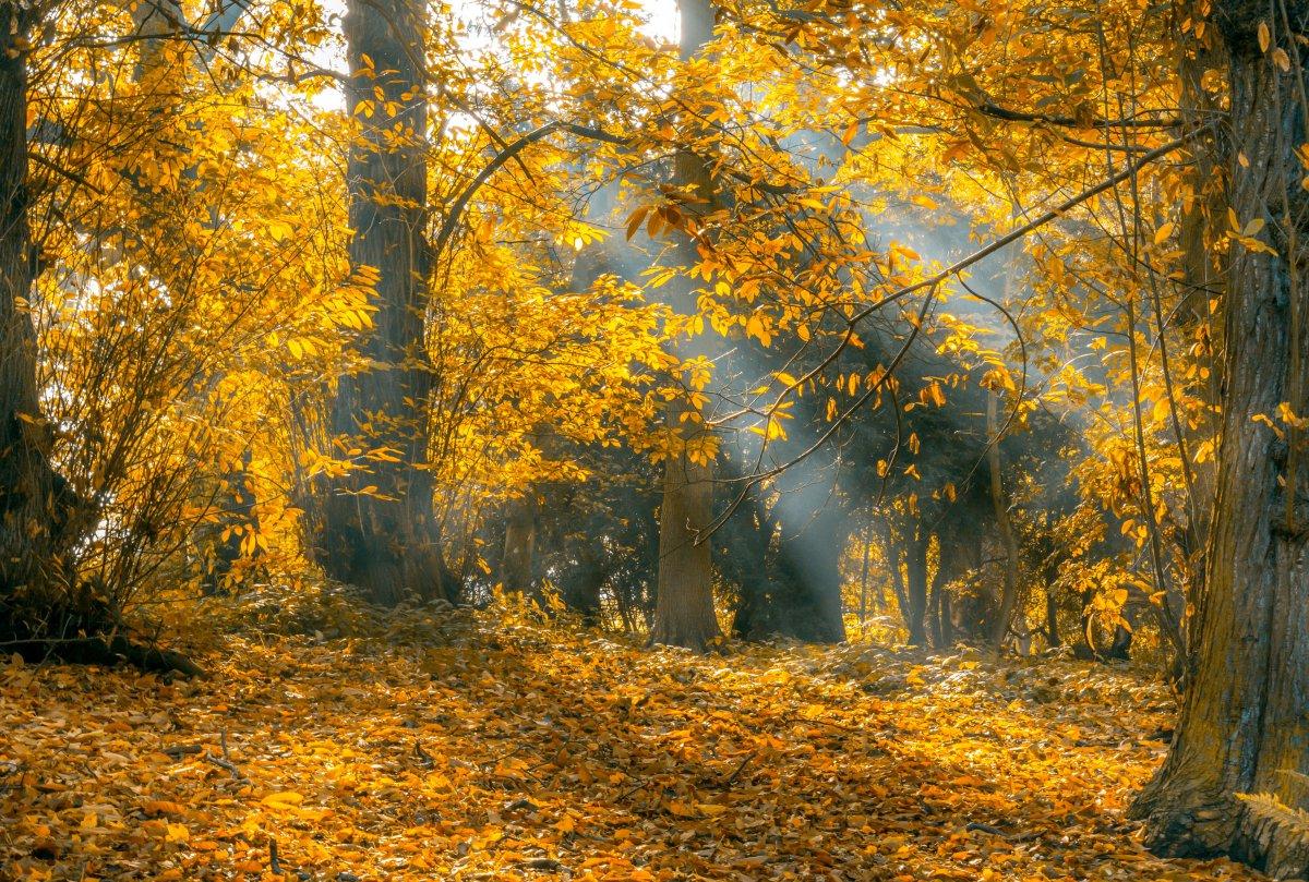 autumn tokyo parks