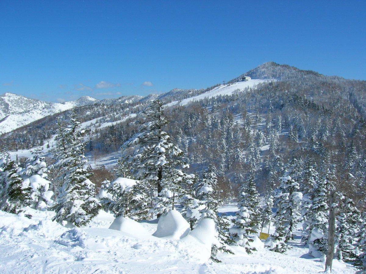 Snow at Shiga KOgen